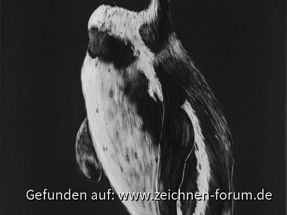 Pinguin - Bild des Monats September 2015