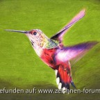 Sinas Kolibri