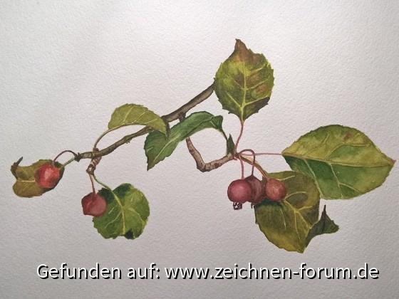 Herbstliche Beeren