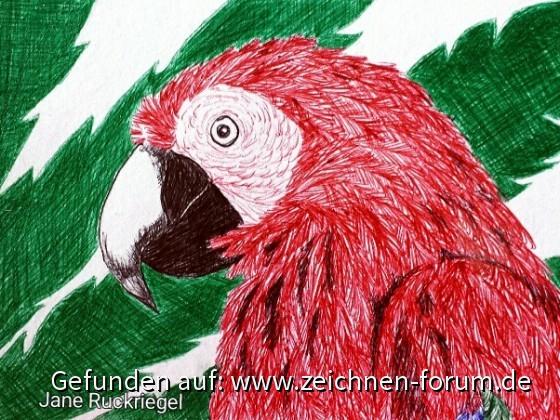 Papagei Postkarte