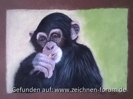 Schimpanse aus dem Zoo Leipzig von Zwerg