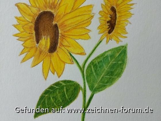 Zwei Sonnenblumenblüten