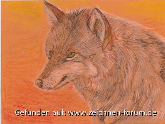 Wolf vor Sonnenuntergang