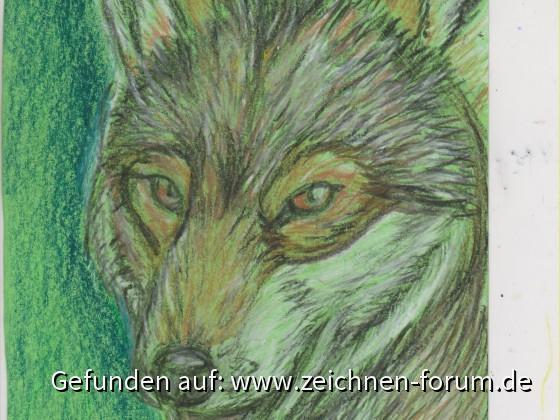 Postkarte Wolf