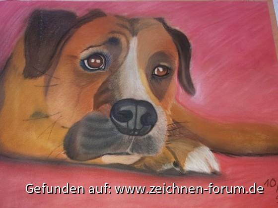 Finn-Pastellhund