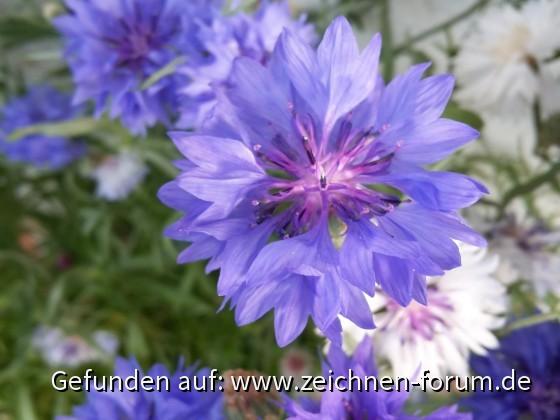 Startseiten Foto - BlueThunder