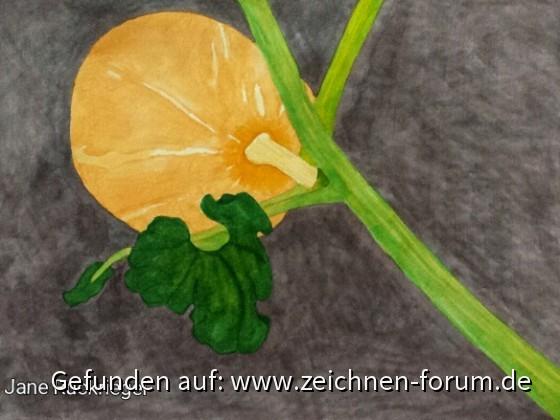 Kürbis gemalt nach Fotovorlage 44