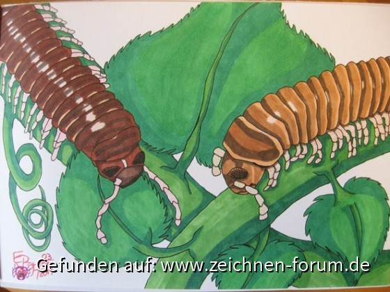 Two Millipede - Sketch