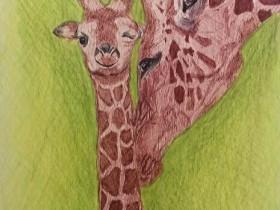 Giraffen für Eileen