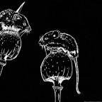 Bild des Monats Januar 2021: Mäuse in schwarz-weiß