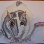fat ratty Charly