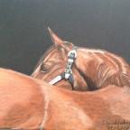 Pferdepopo