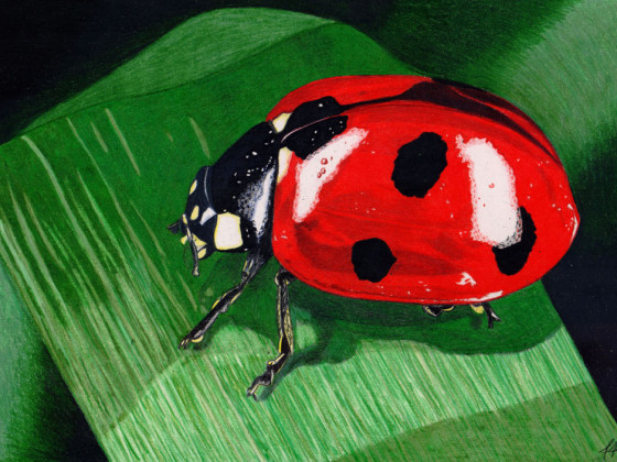 Marienkäfer Makro mit Prismacolor
