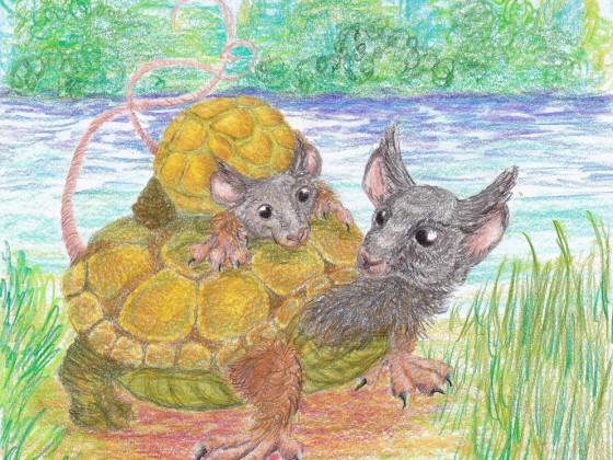 Schildkröten-Maus-Ohreule