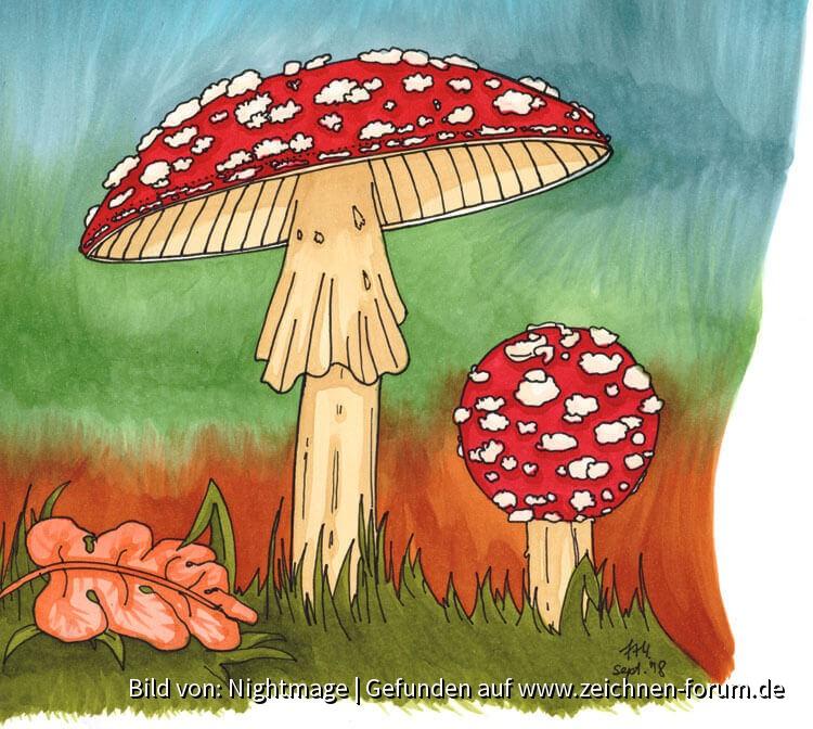 Fliegenpilze auf Waldboden