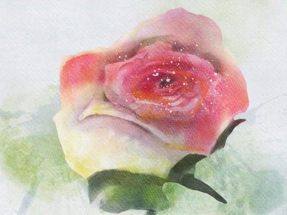 roseIP