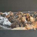 Ü 30 Pferde