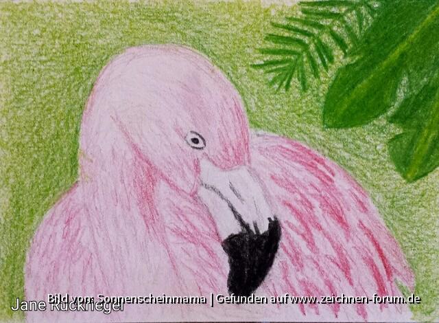 Flamingo für Nightmage