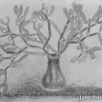 Postkarte für Waldblume