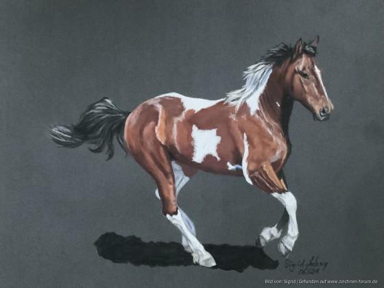 """""""Buntes"""" Pferd"""