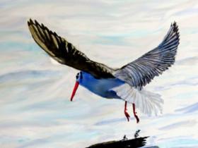 Vogel Spieglungen