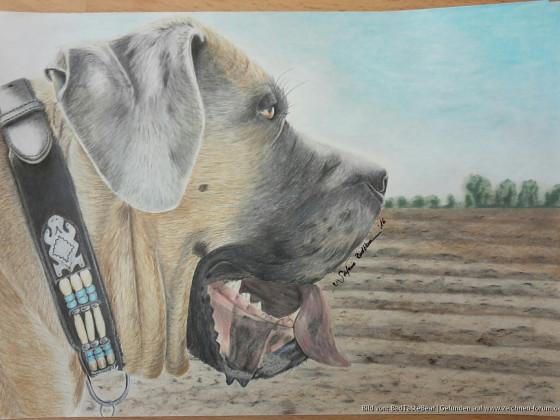 Dogge Taiga