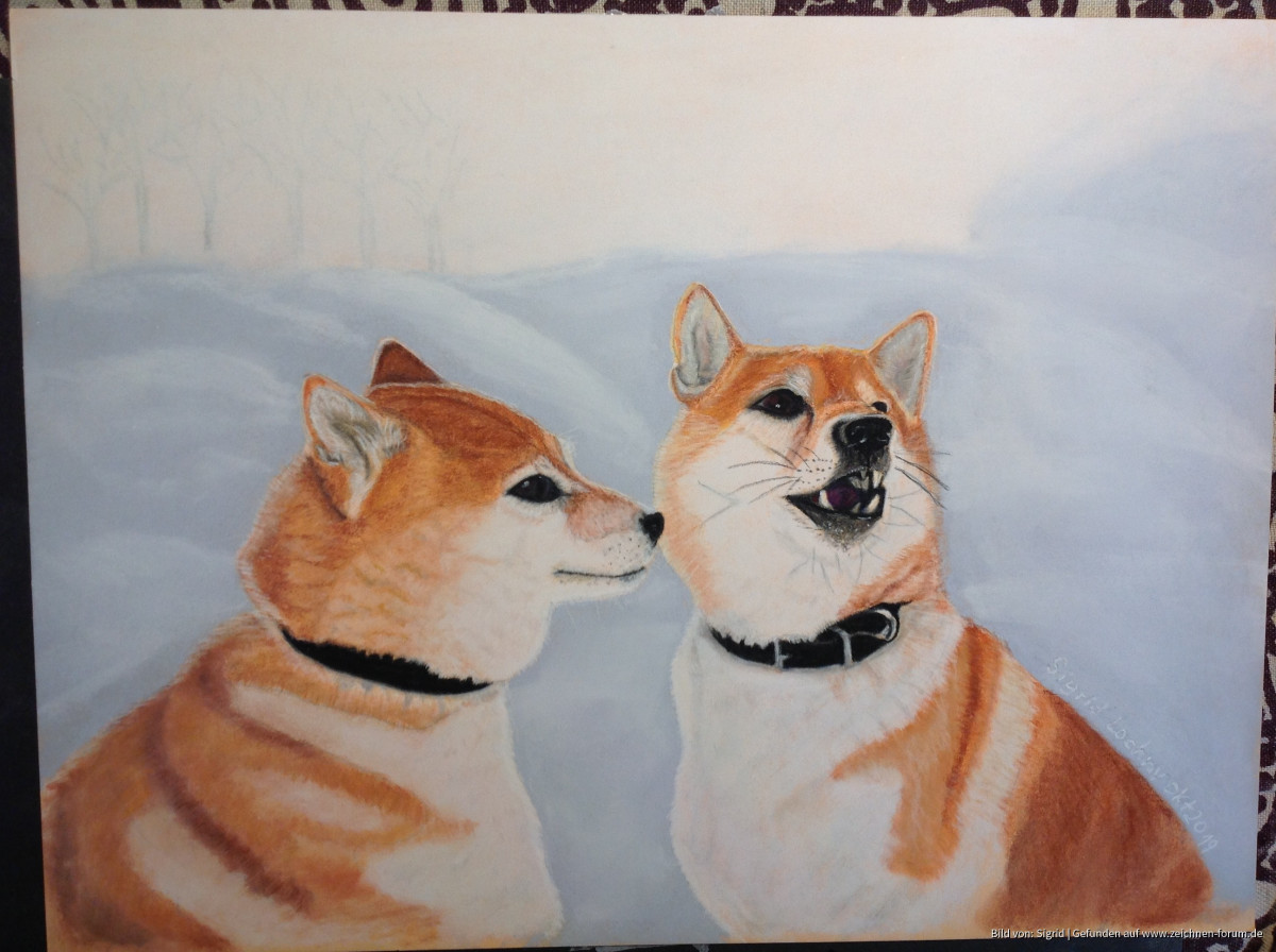Zwei wunderschöne Akitas