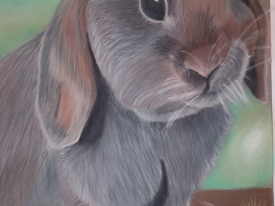 Hasi in Pastell