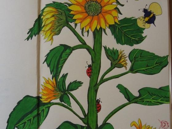 Sonnenblume - Garten-Sketch