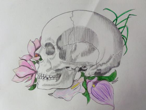 Anatomie Kunst Schädel