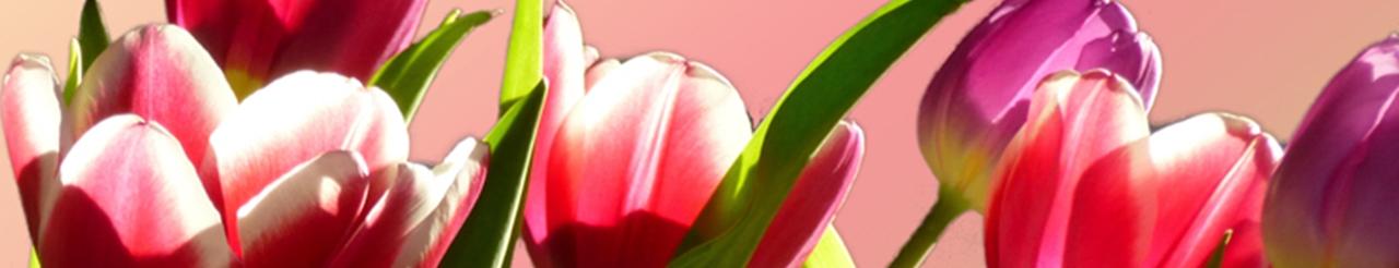 Zeichenübung 38 - Tulpen