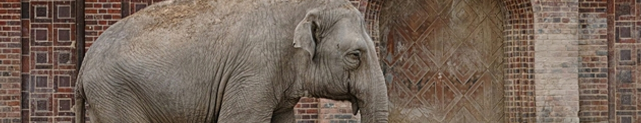 Zeichenübung 40 - Elefant